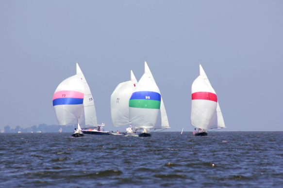 Spinnakers on the Choptank